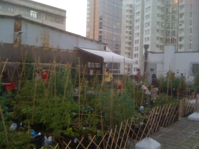 Rooftop farm in Quarry Bay, Hong Kong