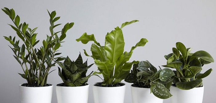 Best indoor plants for hong kong apartments spaced out - Ideal indoor plants ...