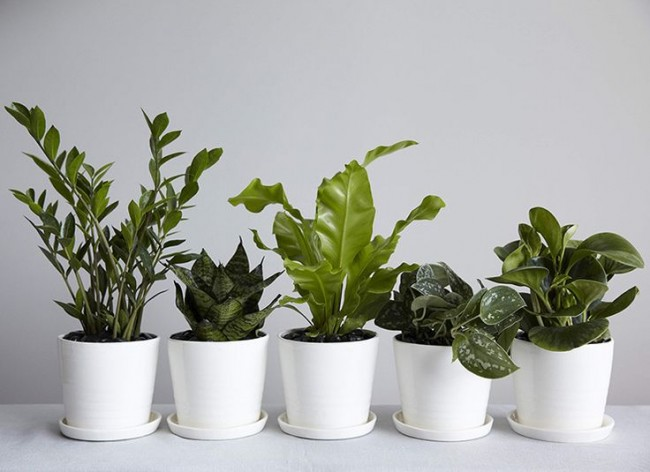 Best Indoor Plants for Hong Kong Apartments - Spaced Out